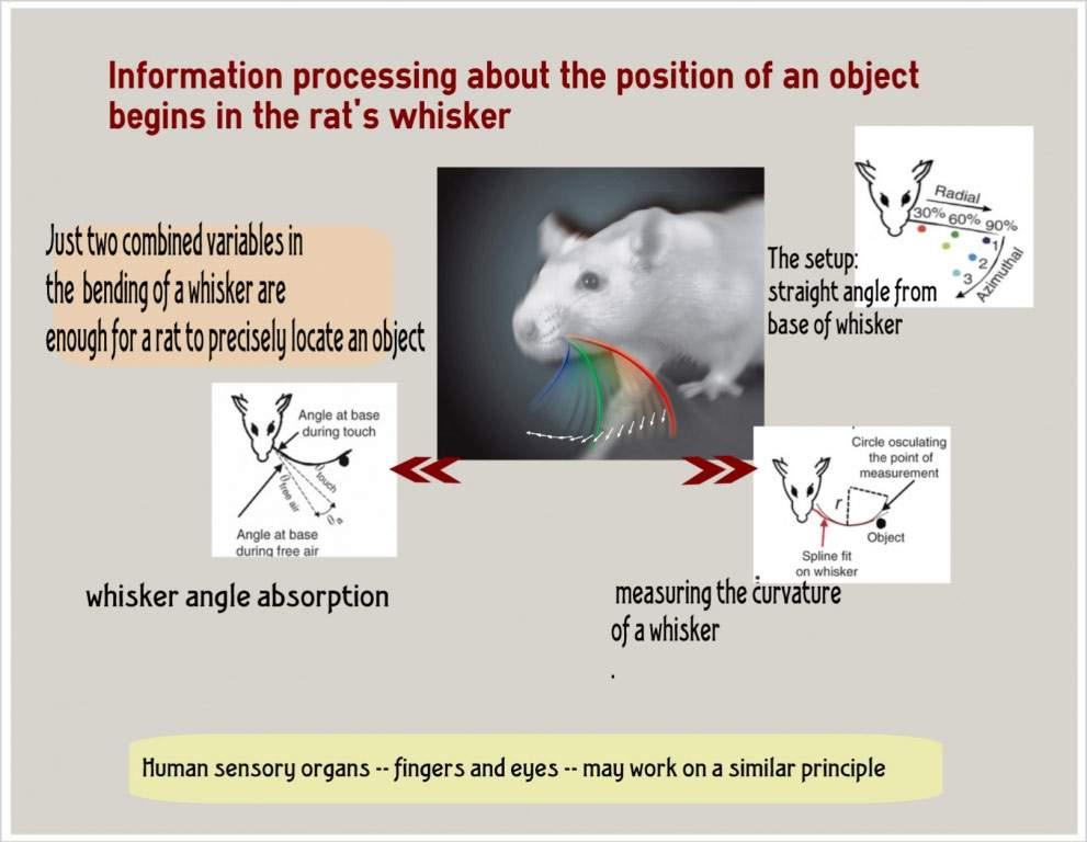 New Angle On Perception Life Sciences Weizmann Wonder Wander