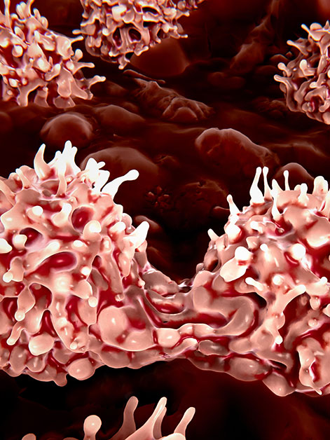 Stem cells dividing in the bone marrow. Photo credit: Shutterstock