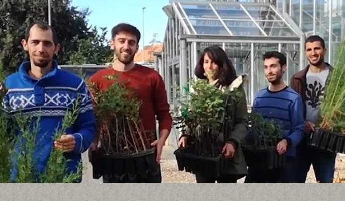 Tamir Klein tree group